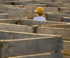 Boy in Potato Box Maze
