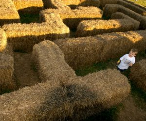 Boy in straw maze