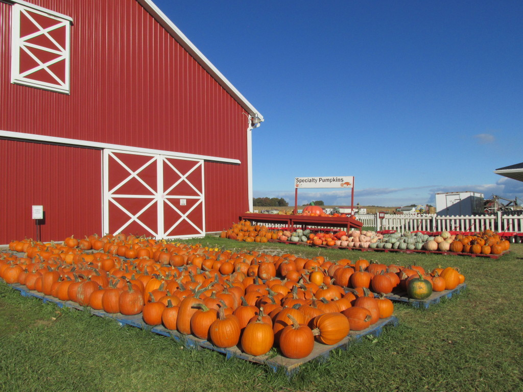 Pre-picked pumpkins for sale