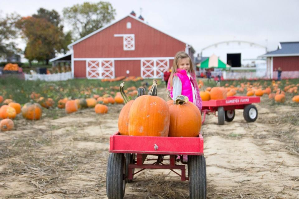 Girl with wagon load of pumpkins